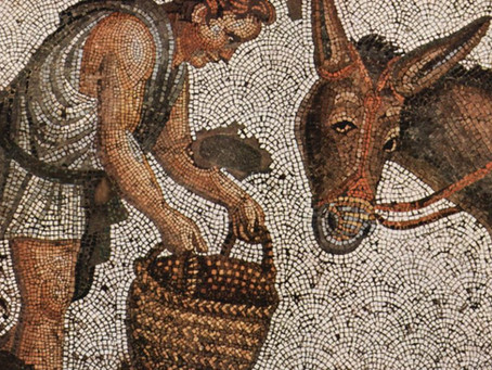 The History of the Donkey