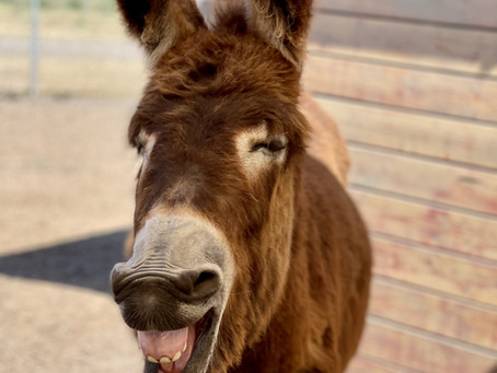 15 Fun Factoids About Donkeys