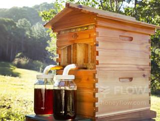 De HoneyFlow bijenkast in onze tuin !
