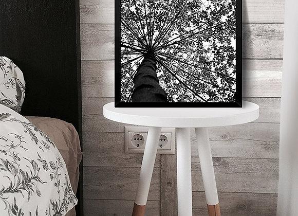 Quadro Contraste Árvore e Céu