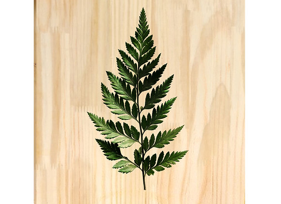 Quadro de Pinus - Folha