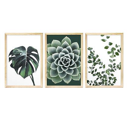 Trio de Quadros Moldura Pinus - Botânico
