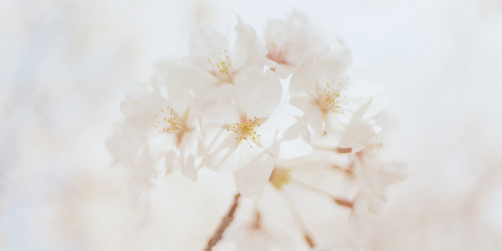 Soirée Méditation (Harmonie à soi - Harmonie à la Terre) - en ligne