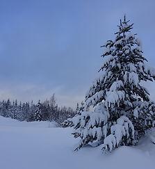 lumipuu