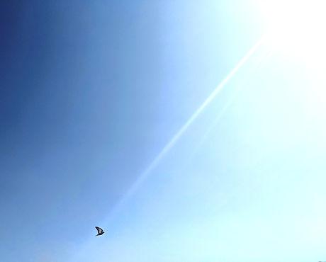 skybird_edited_edited.jpg