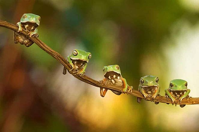 froggiesonvine.jpg