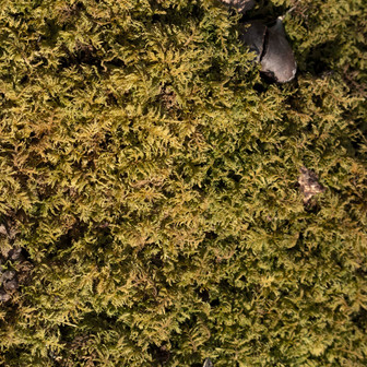 Green and mossy