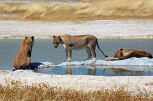 Namibia Privatreisen & Safaris
