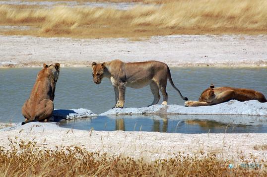 Namibia Privatreisen