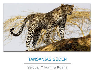 Tansania-Süden-Safaris.jpg