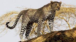 Tansania_Safaris_Süden_Klein.jpg