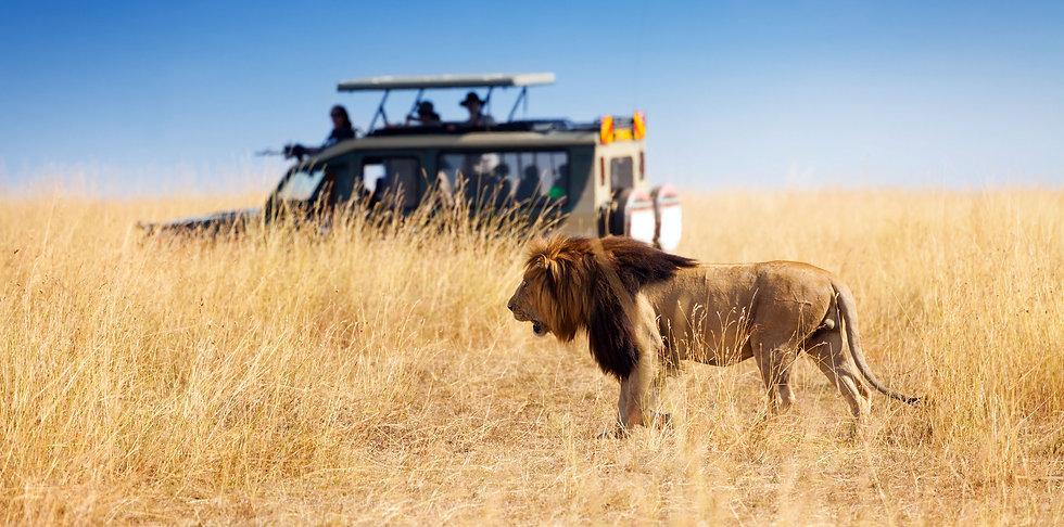 Safaris_Reisen.jpg