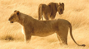 Botswana_Deluxe Safari.jpg