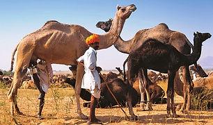 Rajasthan Privatreisen_Klein.jpg