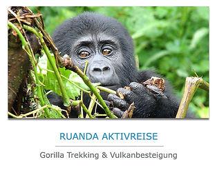 Ruanda-Gorilla-Trekking.jpg