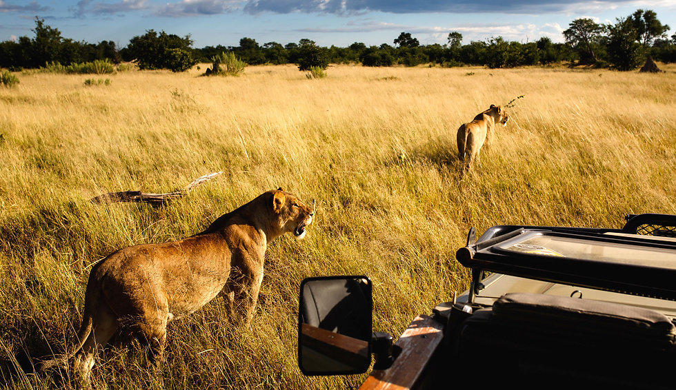 Botswana-Private-Safaris.jpg