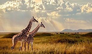 Tansania Safari Norden_Klein.jpeg