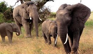 Kenia-Privatsafari-Kompakt-klein.jpg