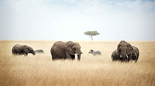 Tansania Luxus Safaris.jpeg