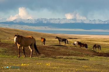 7 Kirgistan Reisen.jpg