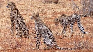 Kenia_Reise klein.jpg