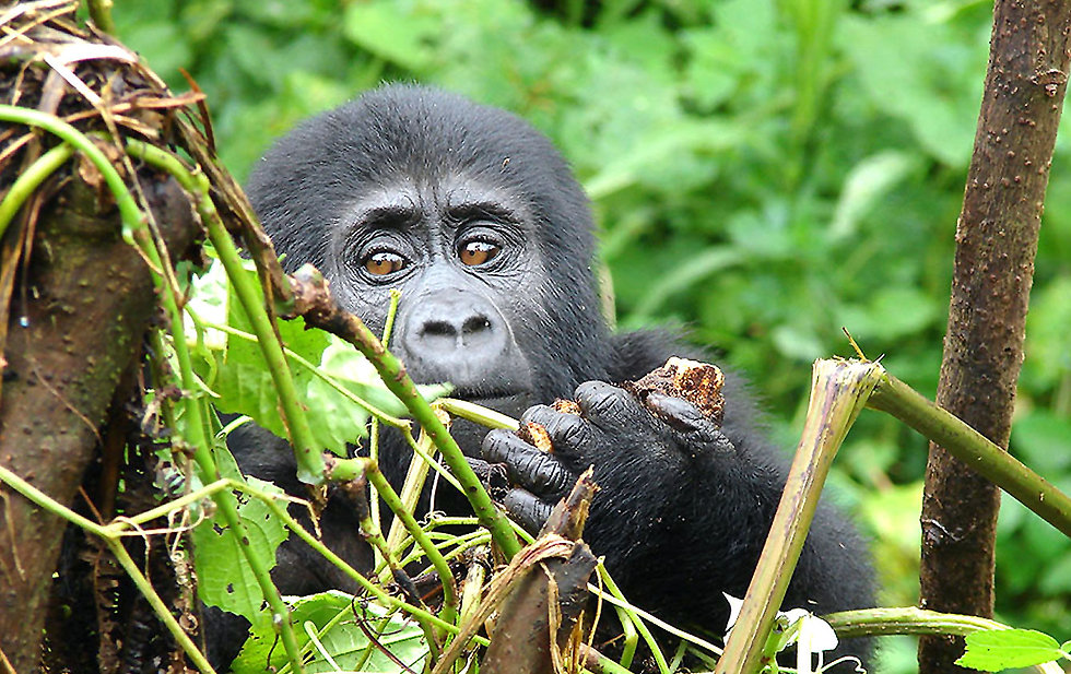 Ruanda-Uganda-Reisen.jpg