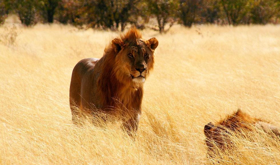 Sambia-Private-Safaris.jpg