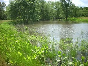 Wetland Habitat Restoration