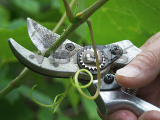 Your Ugly Season of Pruning is About to Produce a Beautiful Season of Richer and Finer Fruit!