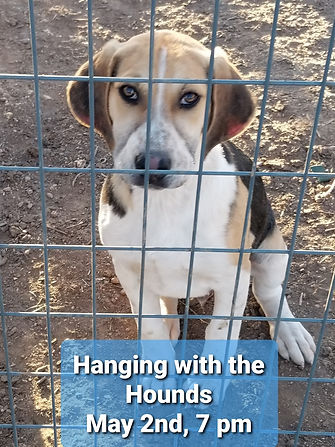 hound photo.jpg