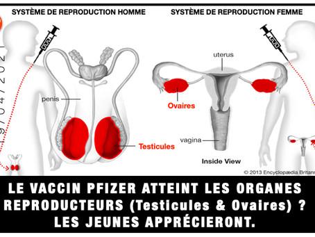 LE VACCIN PFIZER ATTEINT LES ORGANES REPRODUCTEURS (Testicules & Ovaires) ? LES JEUNES APPRÉCIERONT.