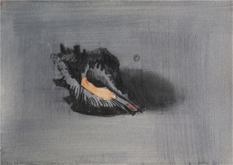 Shell II, pencil and gouache on paper, 14.9x21cm from the Tender series