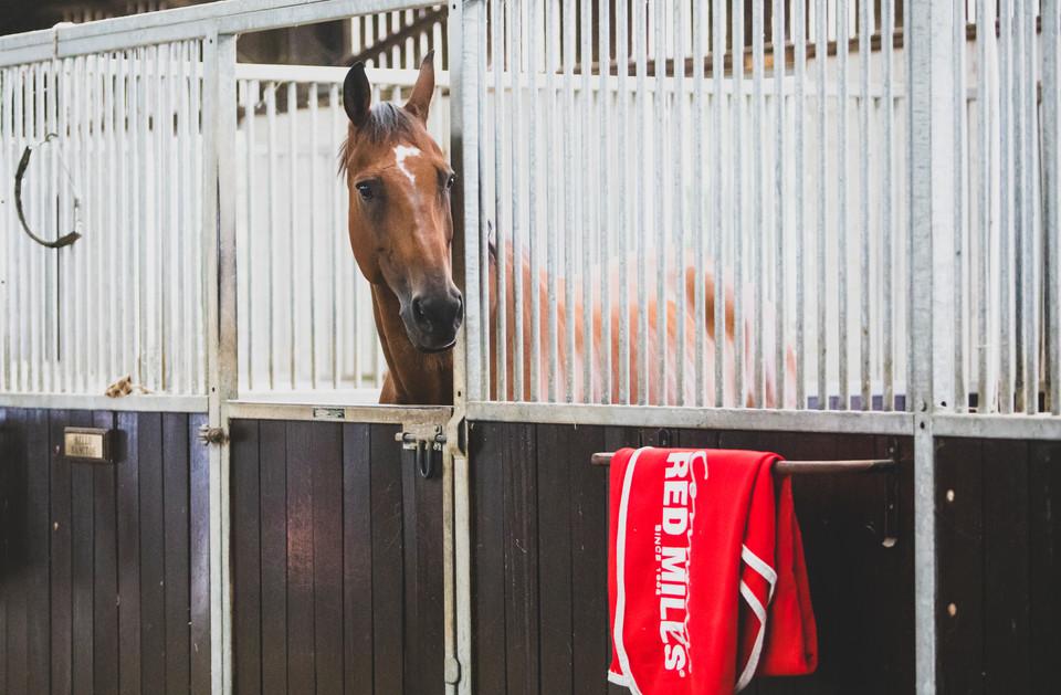 RedMills Horse Feed & Scott Brash