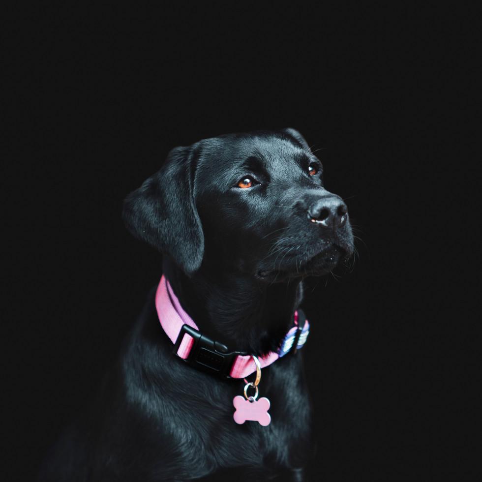 Flora, Canine Photoshoot, Kent