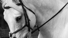 5 Things to do before booking an Equine Photographer