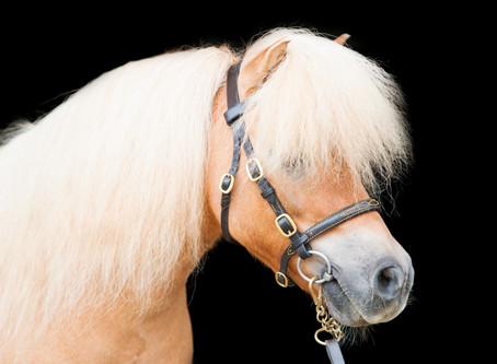 EquusPhoto Q&A
