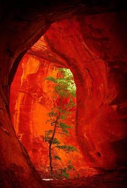 Dragon Cave Tree