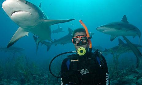 Nassau-Shark-Dive-Diver-1024x732.jpg