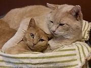 Witty Kitties kitties Angelina Ballerina and CJ