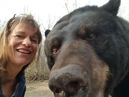 Ben the black bear gets photo bombed
