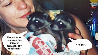 rescued baby raccoons