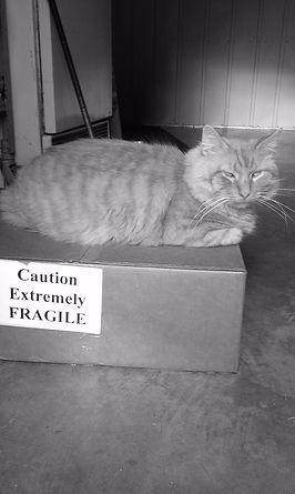 Witty Kitties kitty Mr. E takes his job seriously.