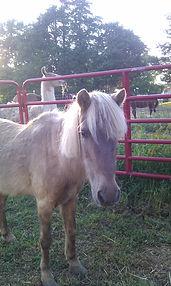 Sonny the pony