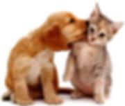 BarkAID Dog Kissing Cat Image