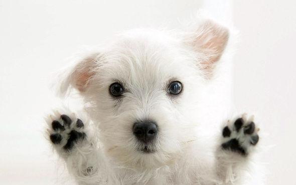 BarkAID Dog Paw On Window Image