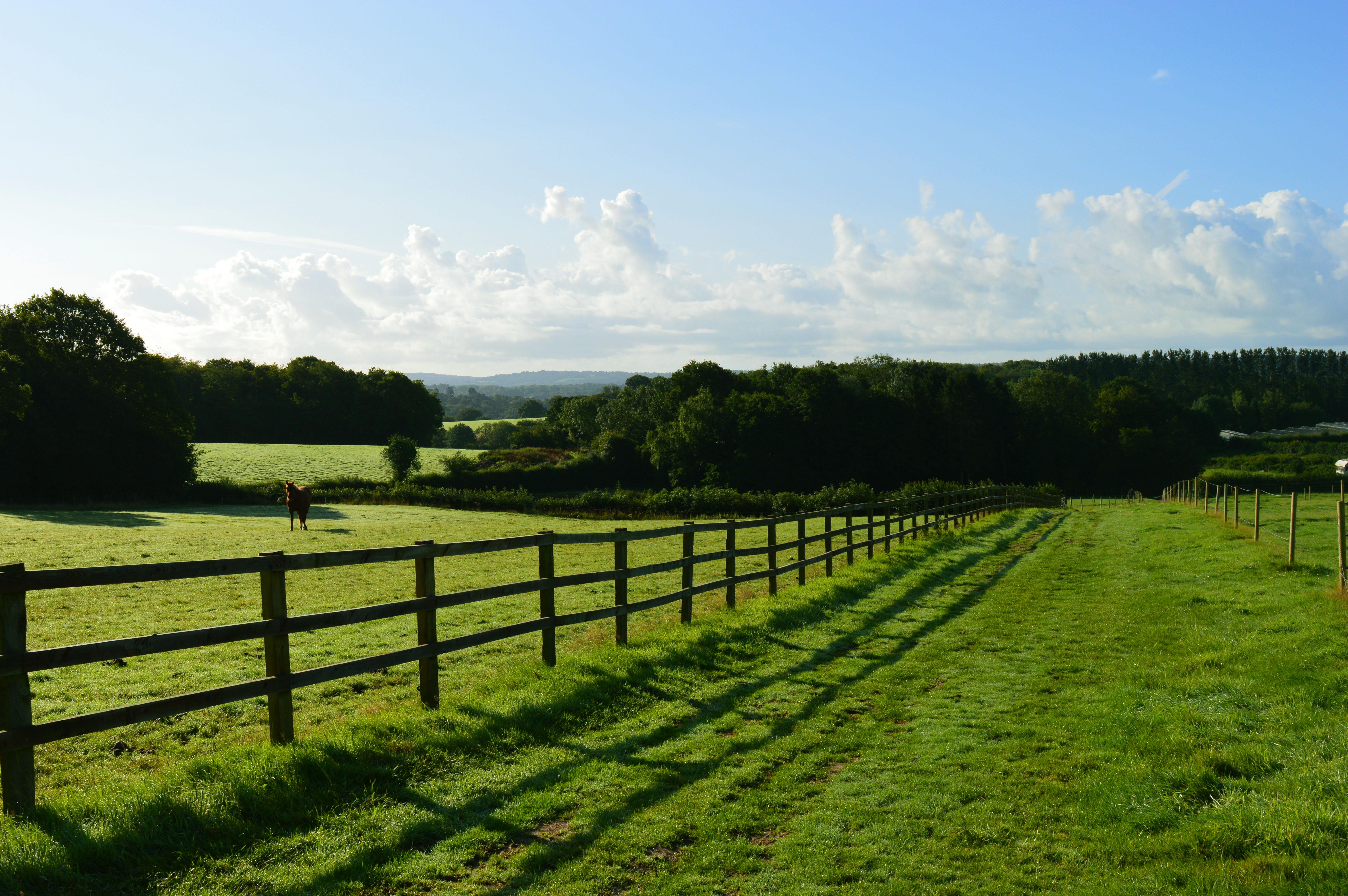 45 acres of well fenced paddocks