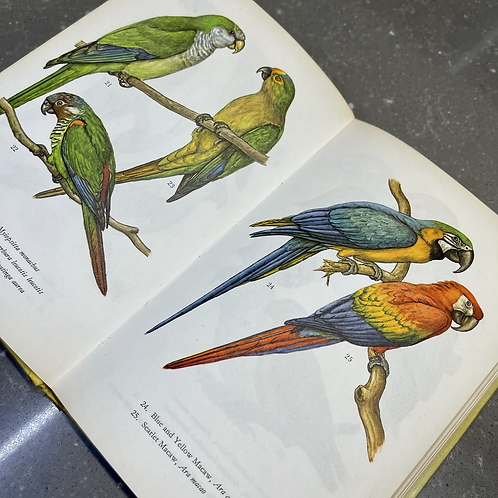 CAGED BIRDS IN COLOUR BOOK