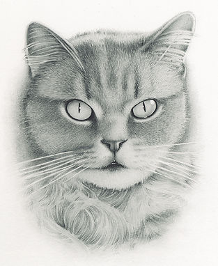 Beautifiul, realistic pencil portrait drawing of a long haired pet cat