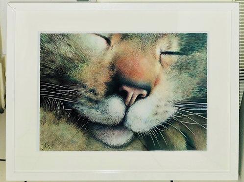 LIMITED EDITION FRAMED PRINT BALLPOINT PEN CAT PORTRAIT