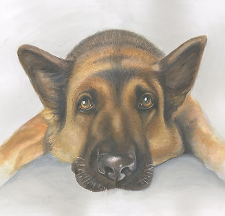 Beautiful A2 watercolour pencil portrait of an Alsation dog looking hopeful!